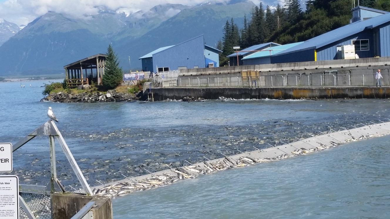 Alaska 2016 harveyontheroad for Fishing high tide